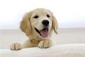 Curso Cómo criar un cachorro