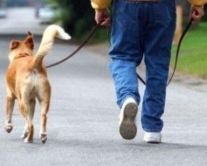 La importancia del paseo