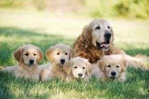 Cómo cuidar a tu perro para que no tenga parásitos