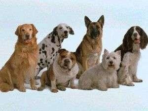 elegir un perro