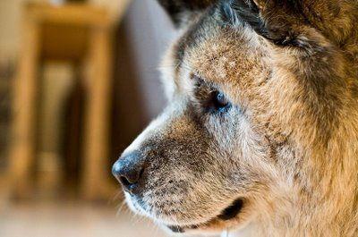 olfato de perros contra diabetes y cáncer 2