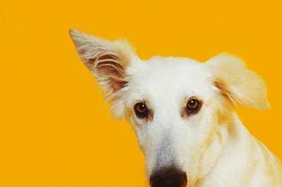 perro-sordo