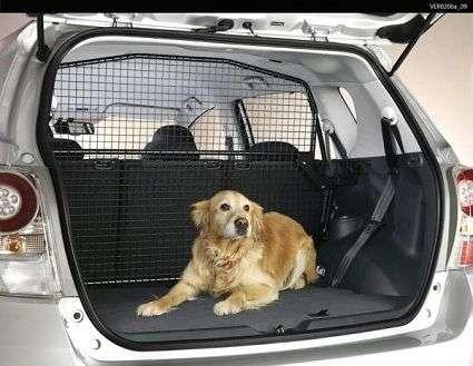 perros que vomitan en el coche