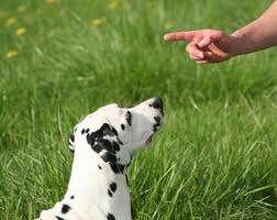 Adiestrar perros