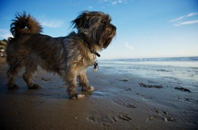 perros en verano