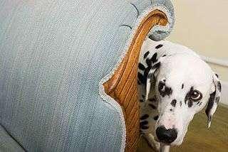 consejos-perro-timido