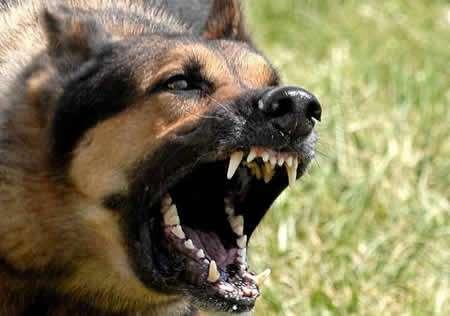 que-hago-si-me-muerde-un-perro_avb1u