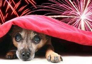 dogs-scared-of-fireworks-300×211