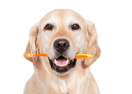 dientes de perros