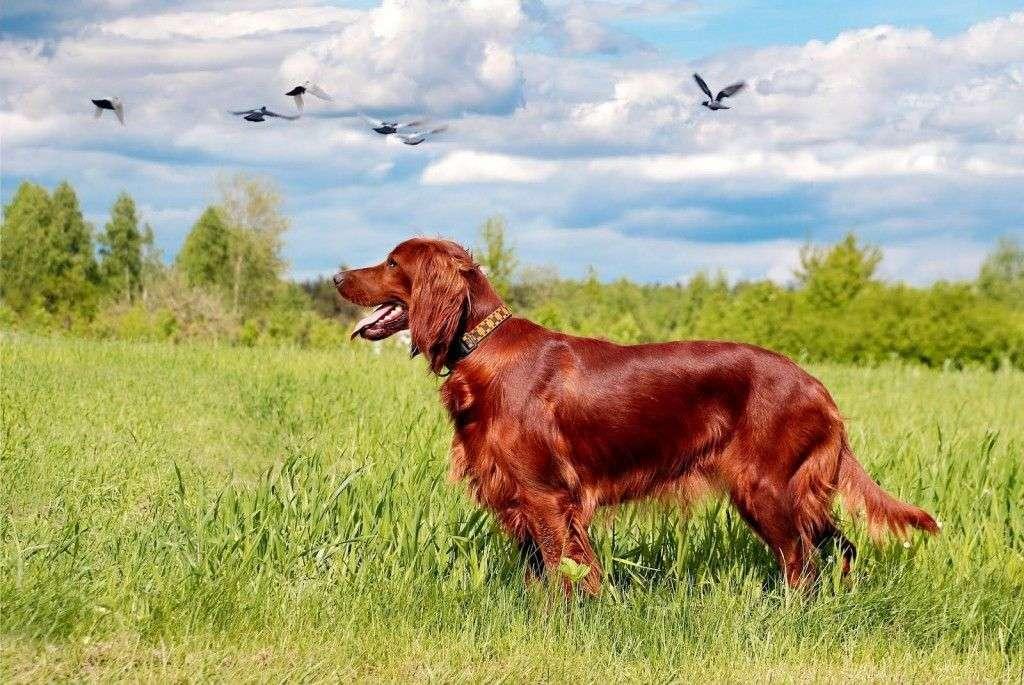 El Perro El Mejor Aliado Para Ir De Caza Articulos De
