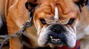 perros, carácter de los perros