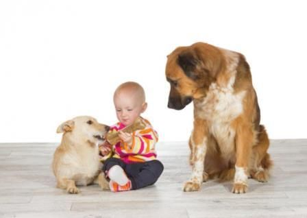 celos en los perros