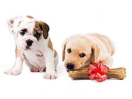 perros-celosos1