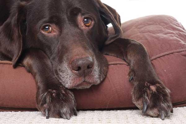 sick-sad-dog