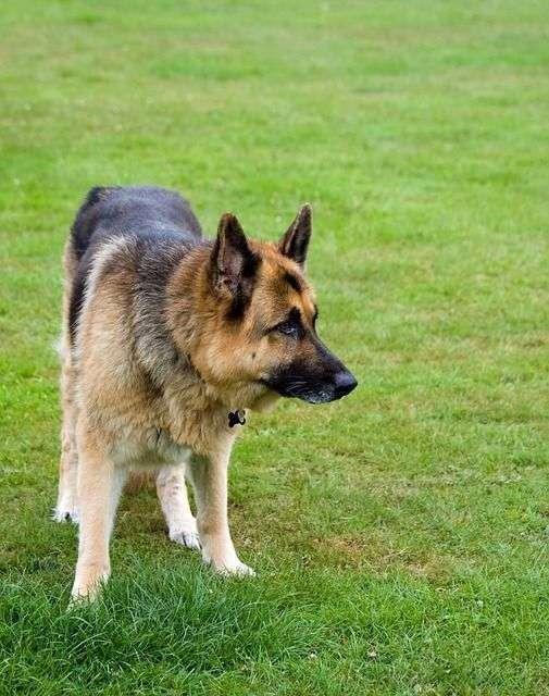 dog-316982_640