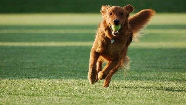 dog_myths