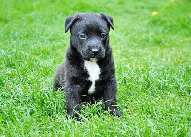 dog-280332_640