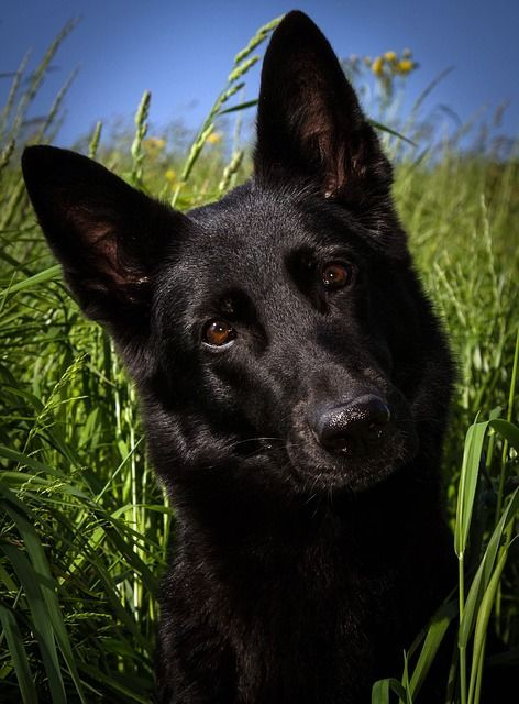dog-353551_640