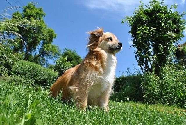 dog-410948_640
