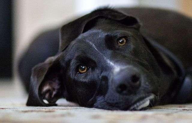 dog-448988_640