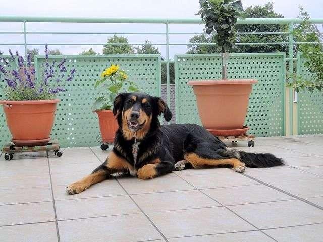 dog-214898_640