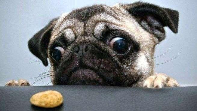 perro-roba-comida-2