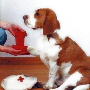 Maletín de primeros auxilios para mascotas