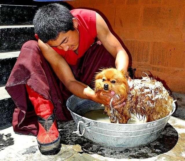 tibet-92475_640