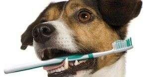 limpiar los dientes a tu perro