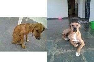 Como cambia un perro cuando es adoptado