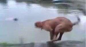 """Un perro """"rescata"""" a su dueño"""