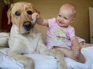 Divertidos videos de perros con bebés