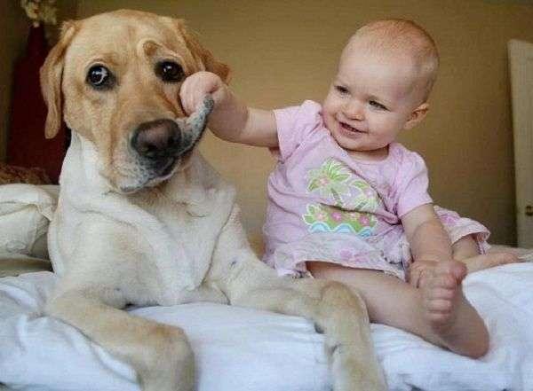 Videos divertidos de perros y bebés