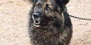 Un perro condenado por ladrar de noche