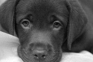 Salud y Mascotas: El Estreñimiento En Los Perros