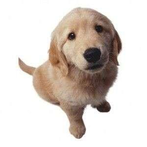 El pienso alarga la vida de tu perro