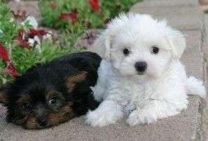 Los cachorros más tiernos de la red