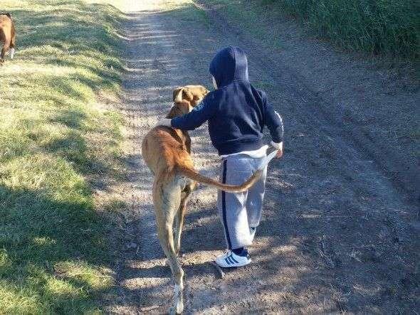 beneficios adiestrar perros