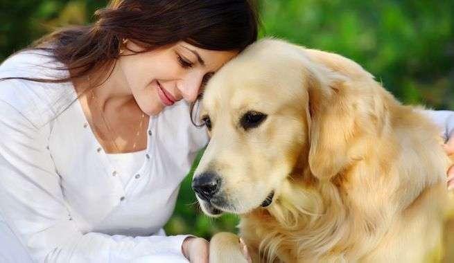 Elegir un  perro no es una tarea fácil y queremos ayudarte a saber cómo puedes hacerlo.