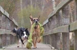 Perros entre los 6 y los 12 meses CUIDADOS Y NECESIDADES