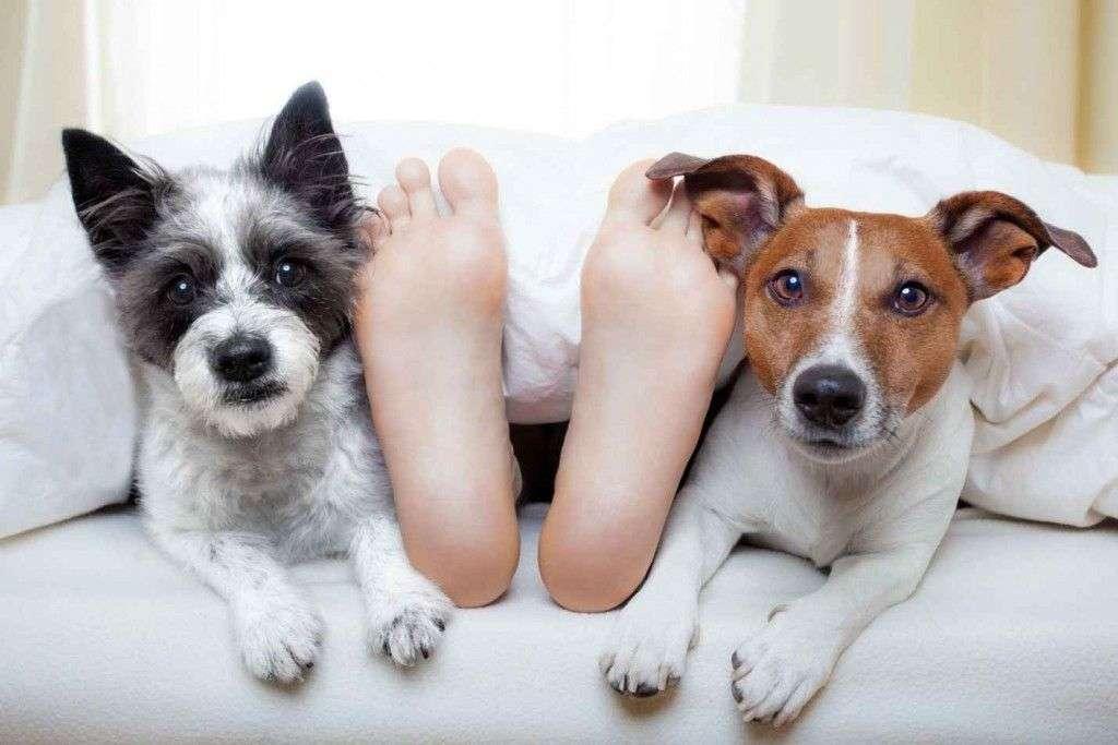 perros-despertando-a-sus-dueños