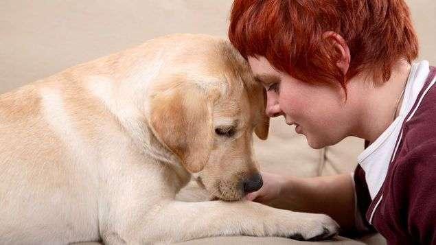 perros-saben-duenos-tristes-FotoDreamstime_MEDIMA20140122_0059_5