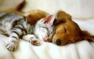 Perros o gatos ¿quién es más inteligentes?