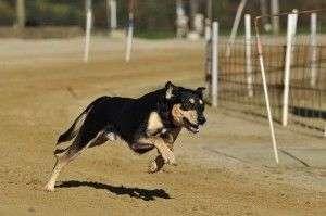Perros DEPENDIENTES de sus dueños