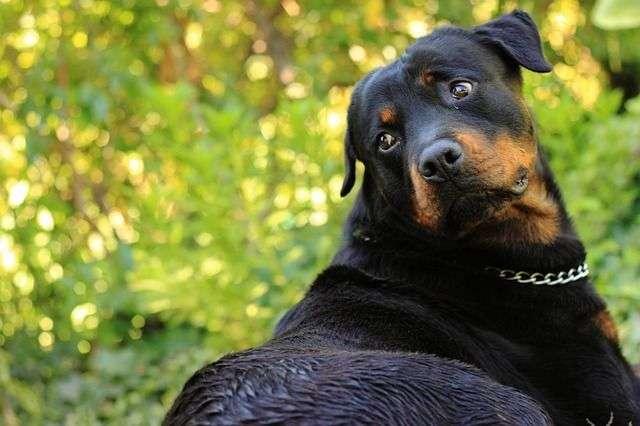 dog-69561_640
