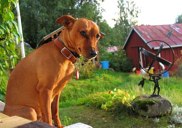 dog-869506_640
