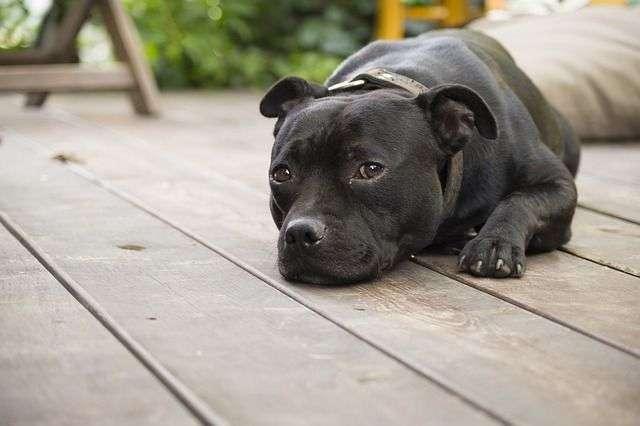Debes tener precaución para que tus mascotas no estén cerca de plantas que son dañinas para ellos, como los lirios que pueden causar insuficiencia renal en gatos y hepática en perros. McConnell aconseja conocer cuáles son dañinas para no tenerlas en casa, o en todo caso en lugares altos o cercados.