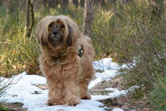 A menudo, puedes pensar que tu mascota no se siente bien y una rápida visita al veterinario te ayudará a confirmar que algo no marcha correctamente.