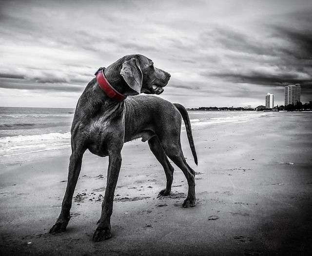 Si tu perro no está acostumbrado a pisar la arena de la playa o terrenos calientes, puedes ponerle una toalla o colchoneta que haga más confortable su estancia ahí.