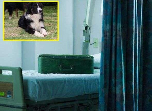 Mete al Perro en su Maleta para Entrar en el Hospital